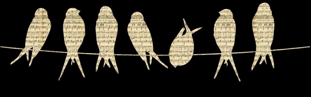 musicbirds